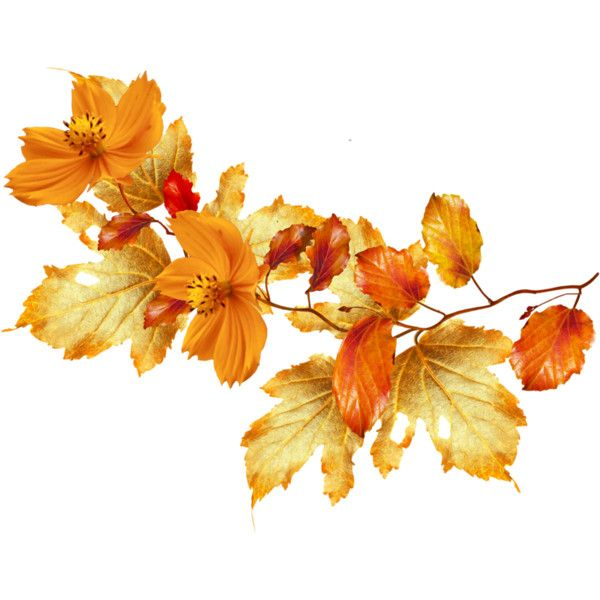 autumn flowers png pinkencheg on my polyvore in  | # - png