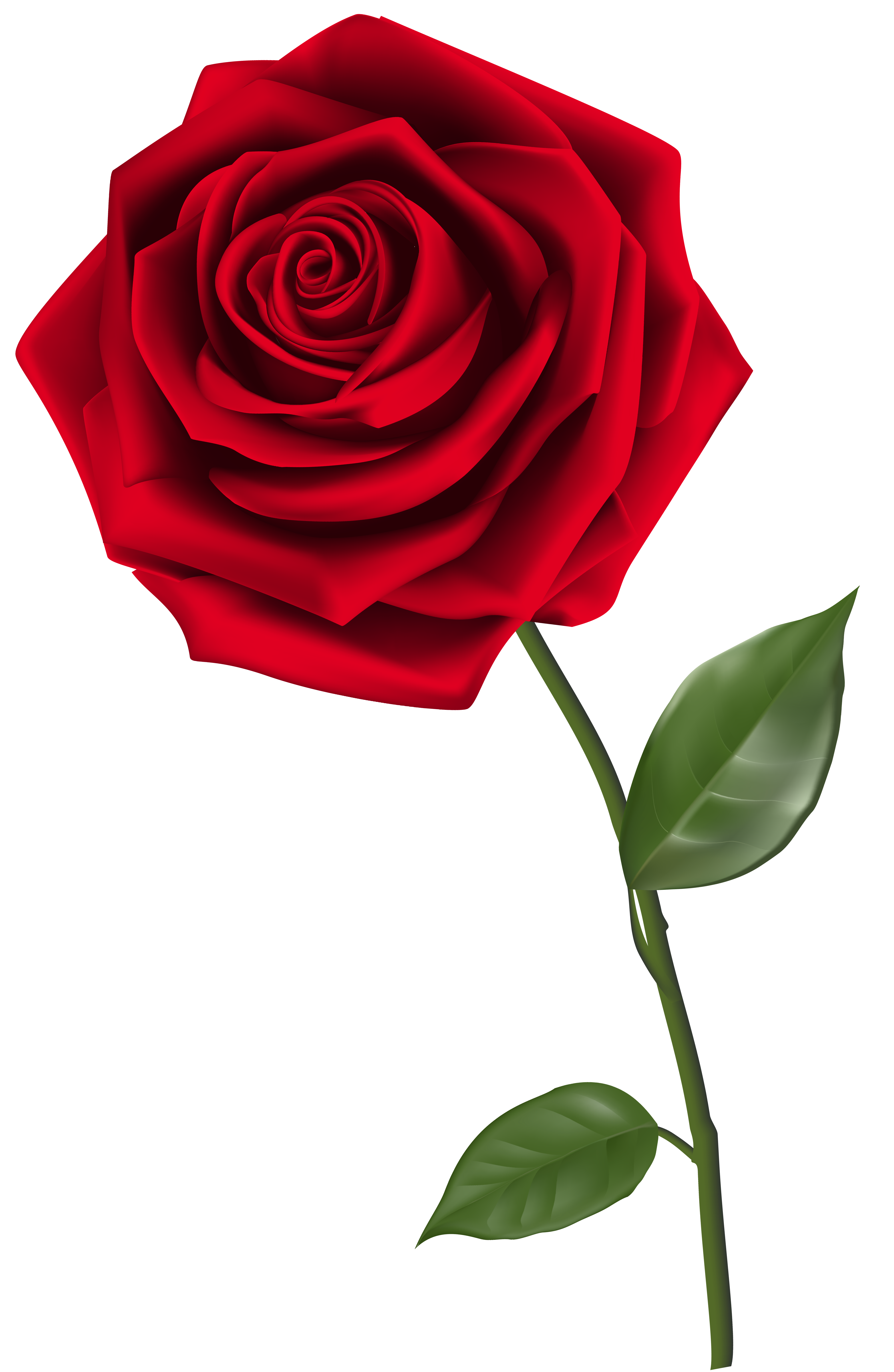 Tiny Rose Png - Pin by Lucky Tusk Co. on Roses | Pinterest | Red roses, Single red rose and  Red rose png