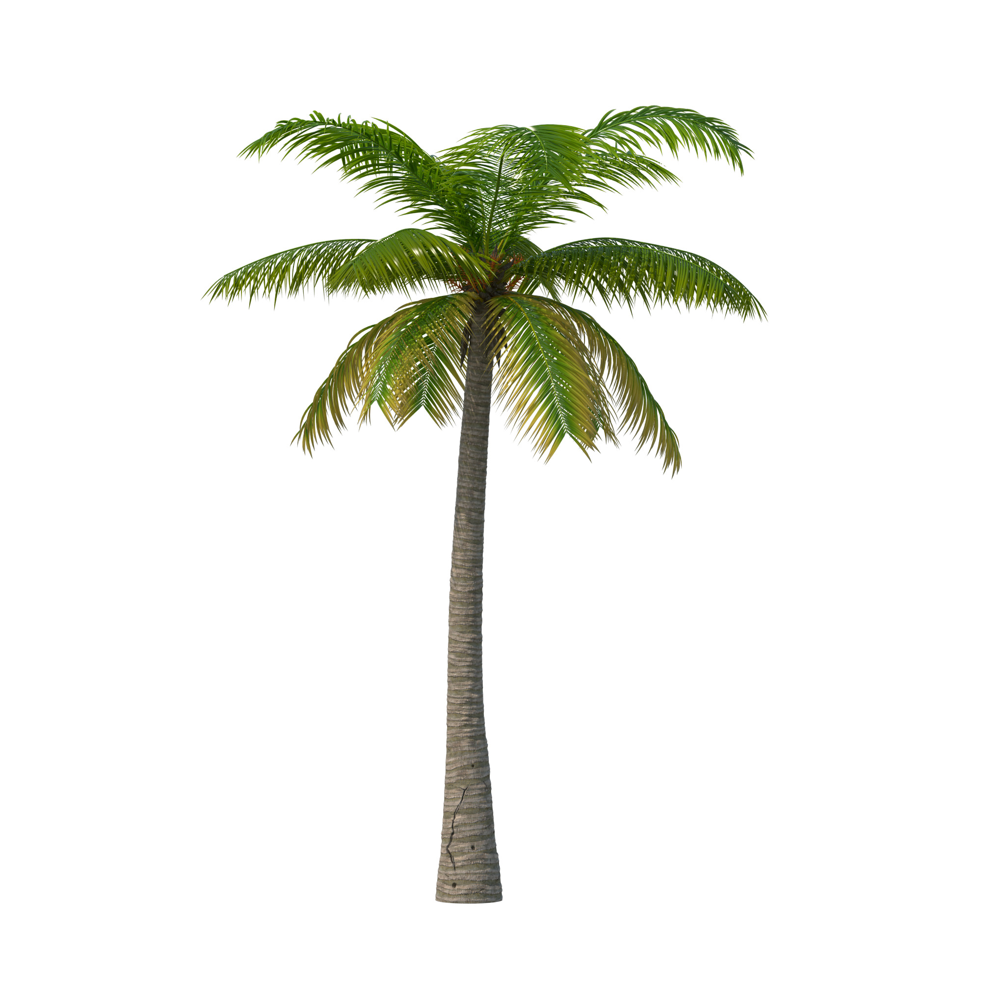 Palm Tree Treetops Png & Free Palm Tree Treetops.png ...