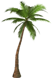 Dead Palm Tree Png - Pin by Shereen Rateb on Trees PNG | Palm tree png, Palm tree clip ...