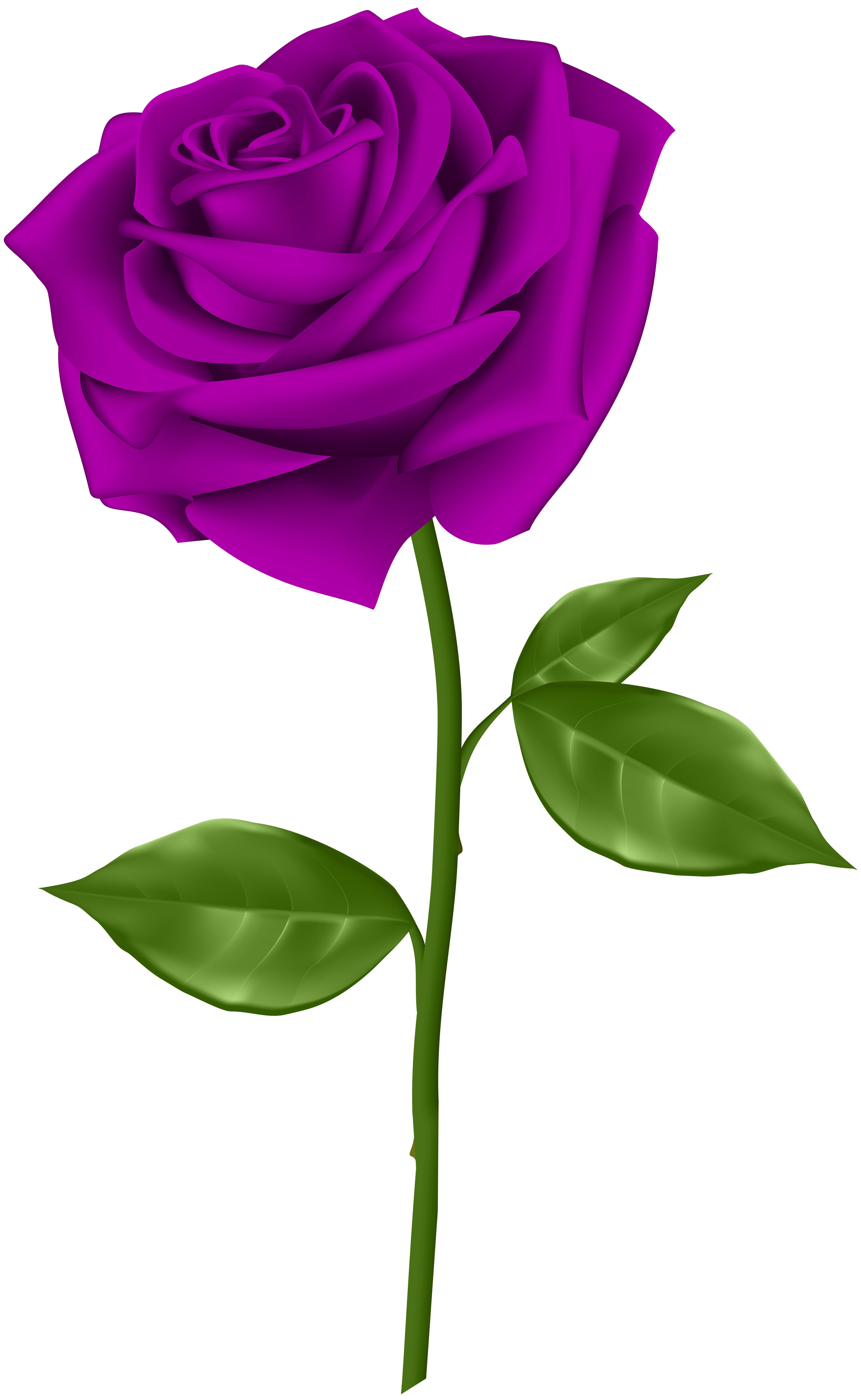 Violet Rose Png - Pin by Zosim Maksimishin on Живопись   Red roses, Red rose png ...
