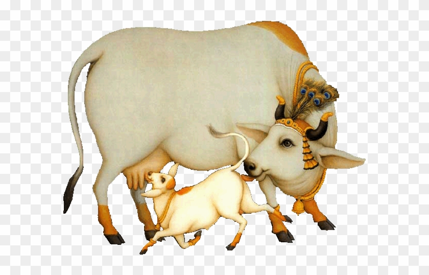 Indian Cow Png Images - Pin Cow And Calf Clipart - Indian Cow & Calf #897719