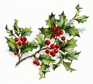 Vintage Christmas Holly Png - Pin em Holidays