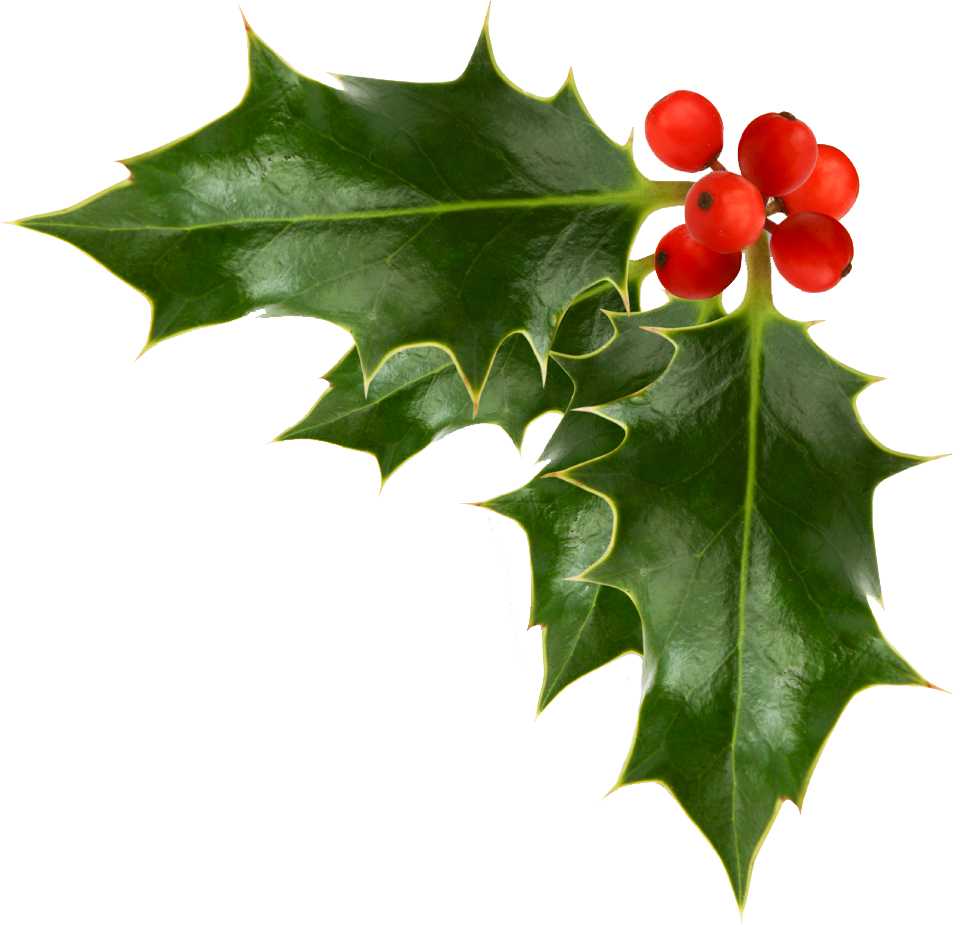 Vintage Christmas Holly Png - Pin on Amys Attic open house