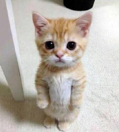 Pus In Boots Sad Face - Pin on Cuteness