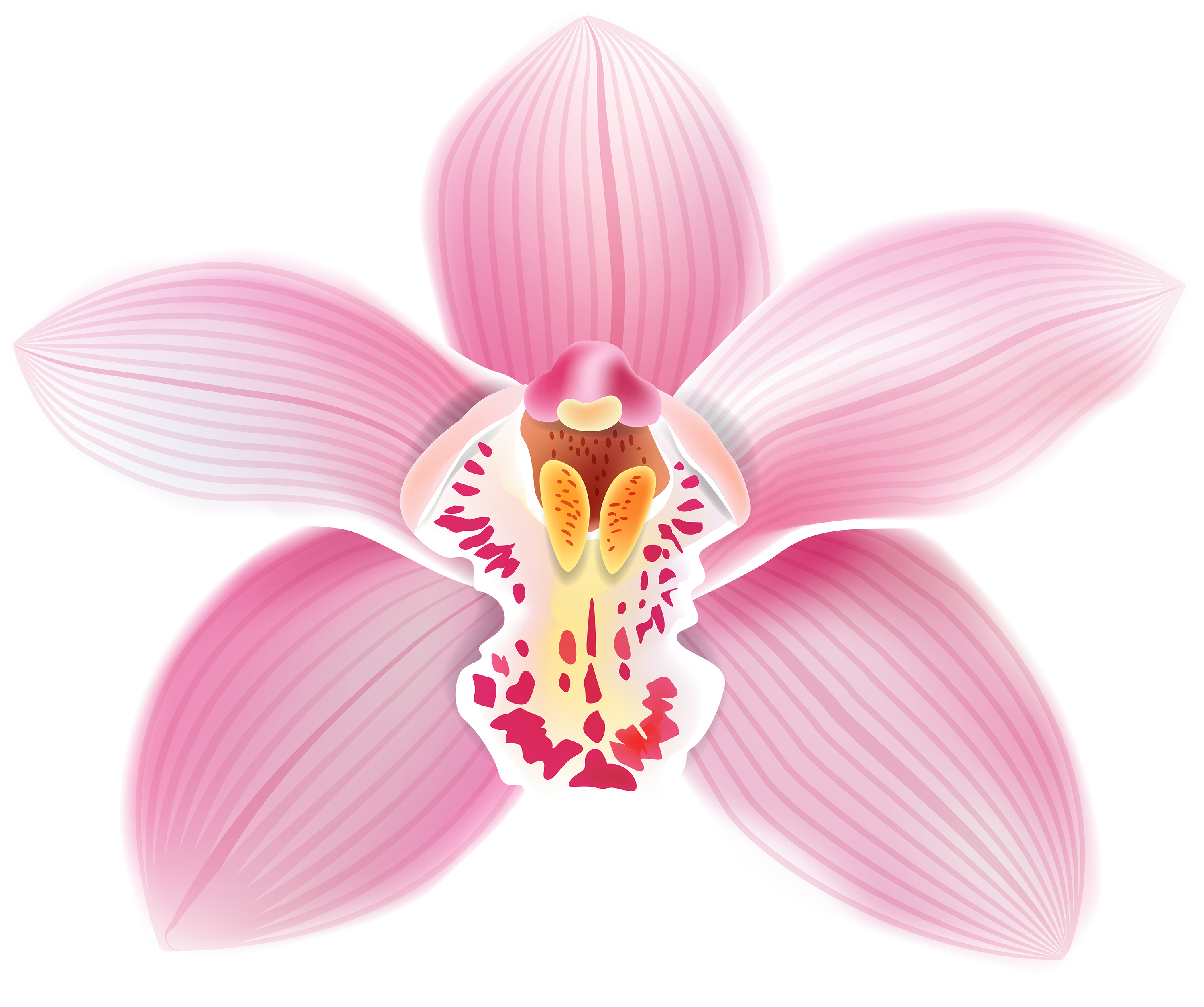 Orchid Flower Png - Pink Orchid PNG Clipart - Best WEB Clipart