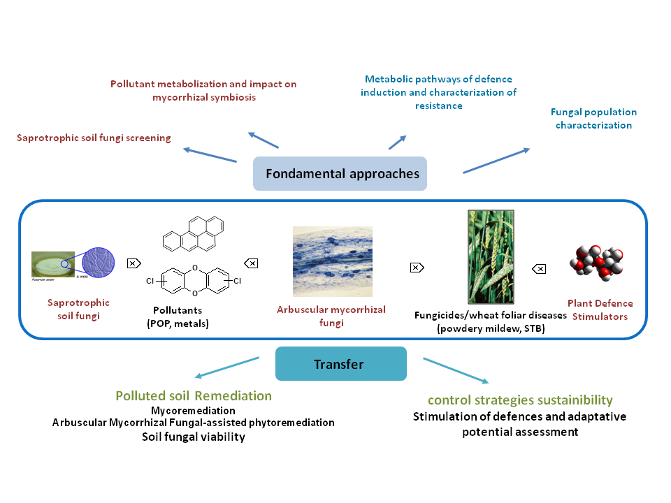 Fungus 3png - Plant-Fungus Interactions and Remediation Team (IPCR) – UCEIV
