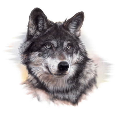Png Wolf Head - PNG Wolf Head Transparent Wolf Head.PNG Images. | PlusPNG