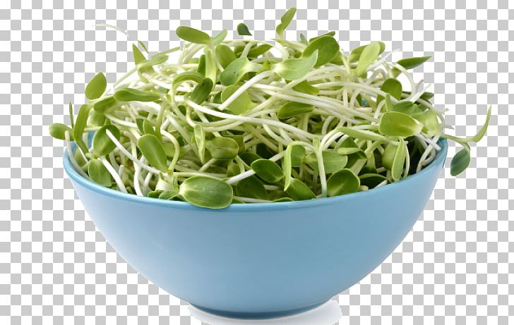 Sprouting Png - Poetry Literature Sprouting Alfalfa Sprouts PNG, Clipart, Alfalfa ...