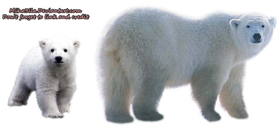 Bears Png Without Background - Polar Bear Transparent Background
