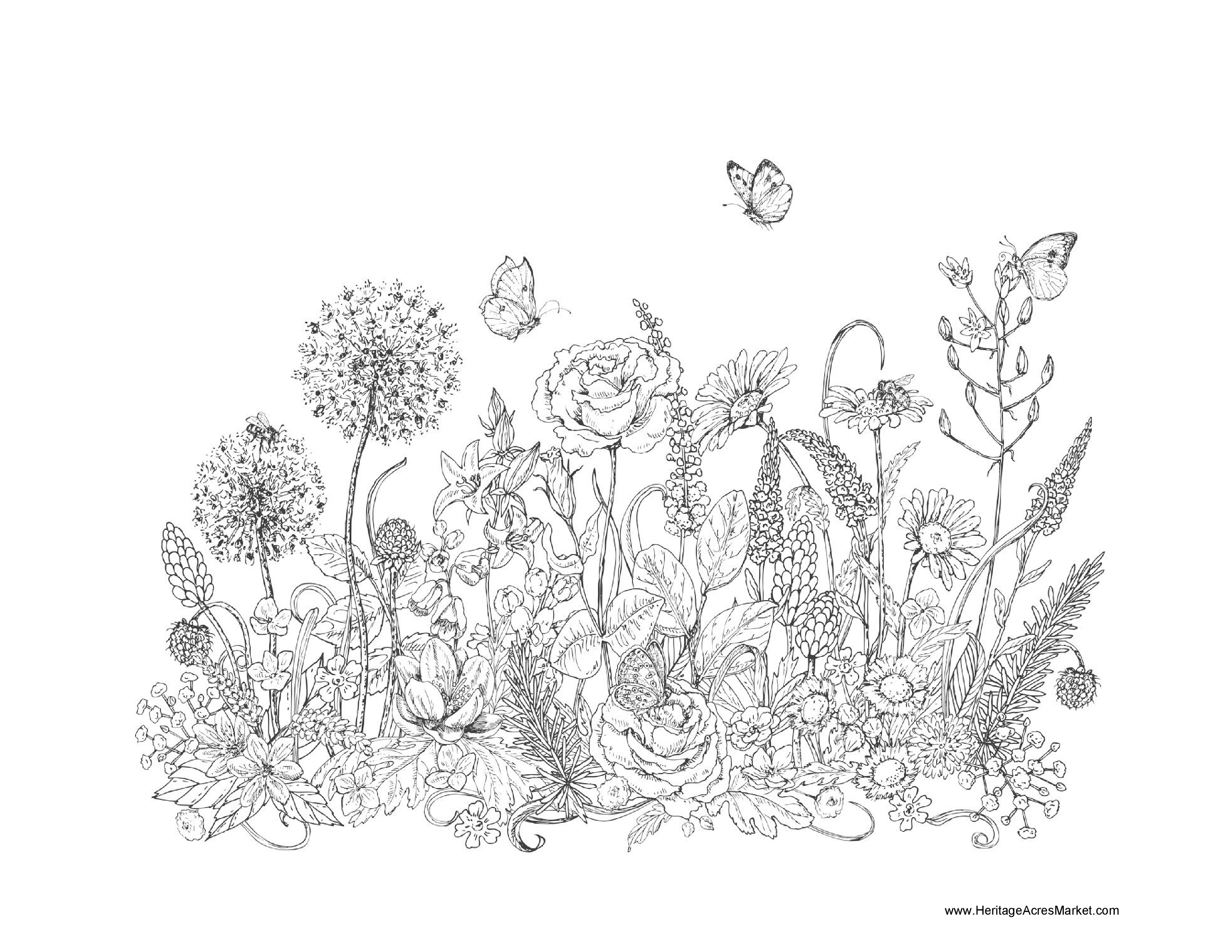 Wildflower Coloring Pages Png Free Wildflower Coloring Pages Png Transparent Images 84583 Pngio