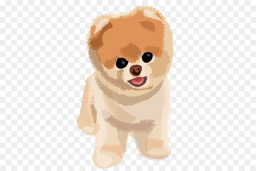 Boo The Dog Png - Pomeranian Puppy Boo - Boo Dog PNG Transparent Image