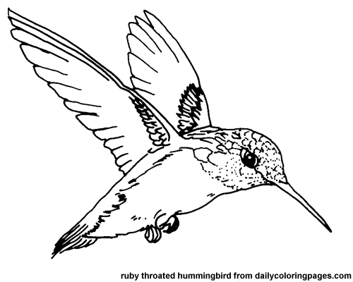 Hummingbird Coloring Pages Png & Free Hummingbird Coloring Pages