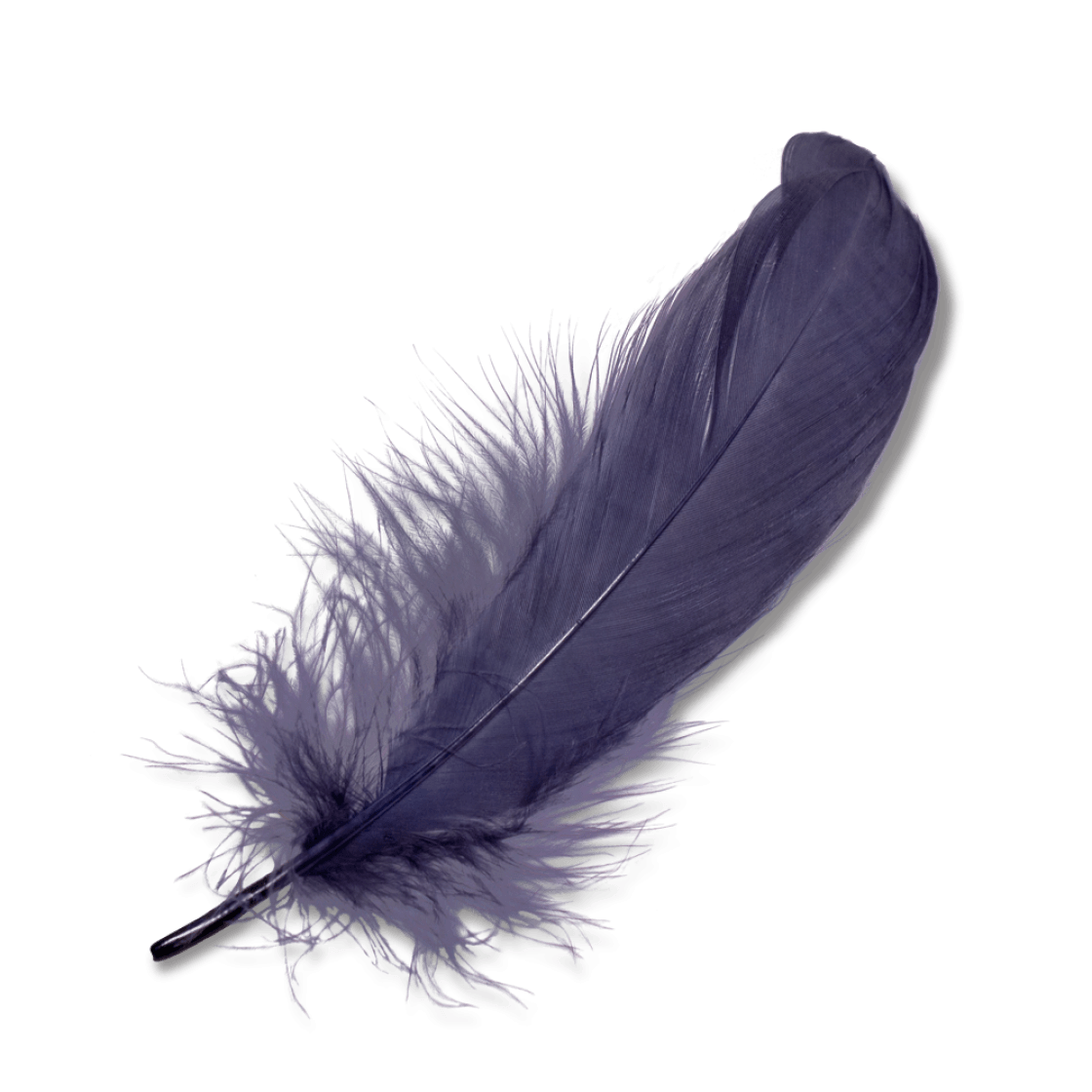 Feathers Png  U0026 Free Feathers Png Transparent Images  10224