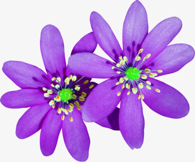 Purple Cartoon Flowers Png Free Purple Cartoon Flowers Png Transparent Images 65326 Pngio