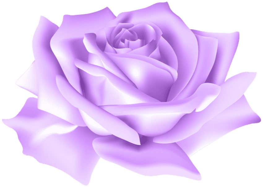 Violet Rose Png - Purple Rose Png, png collections at sccpre.cat