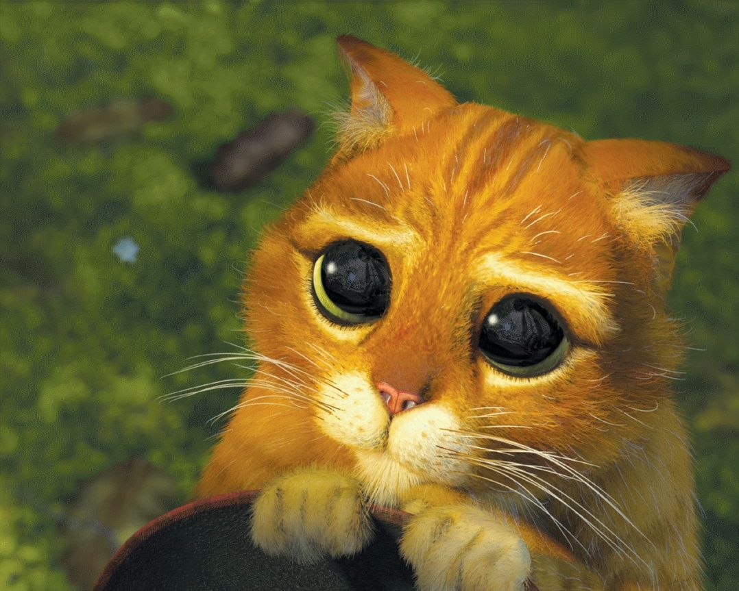 Pus In Boots Sad Face - Puss In Boots cute face | Gaming | Shrek cat, Cats, Get well soon