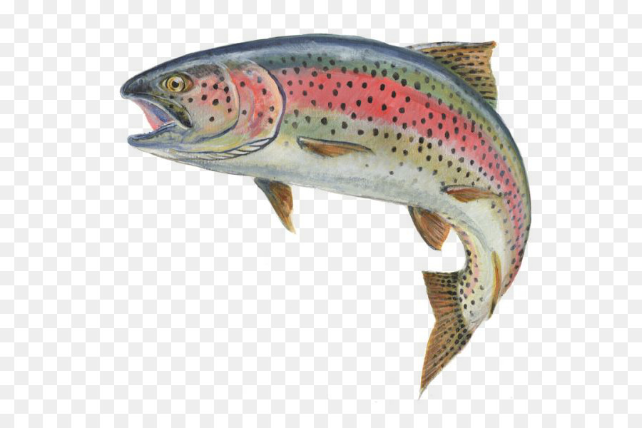 rainbow trout fly fish 54610 png images pngio
