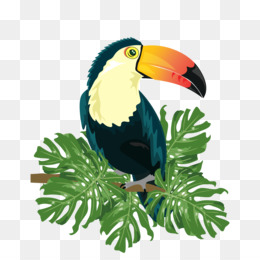 Ramphastos Png - Ramphastos PNG and Ramphastos Transparent Clipart Free Download.