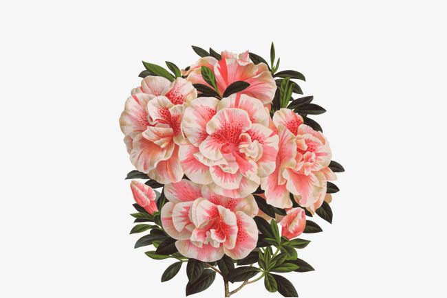 Real Flowers Png 89 Images In Collecti 254150 Png Images Pngio