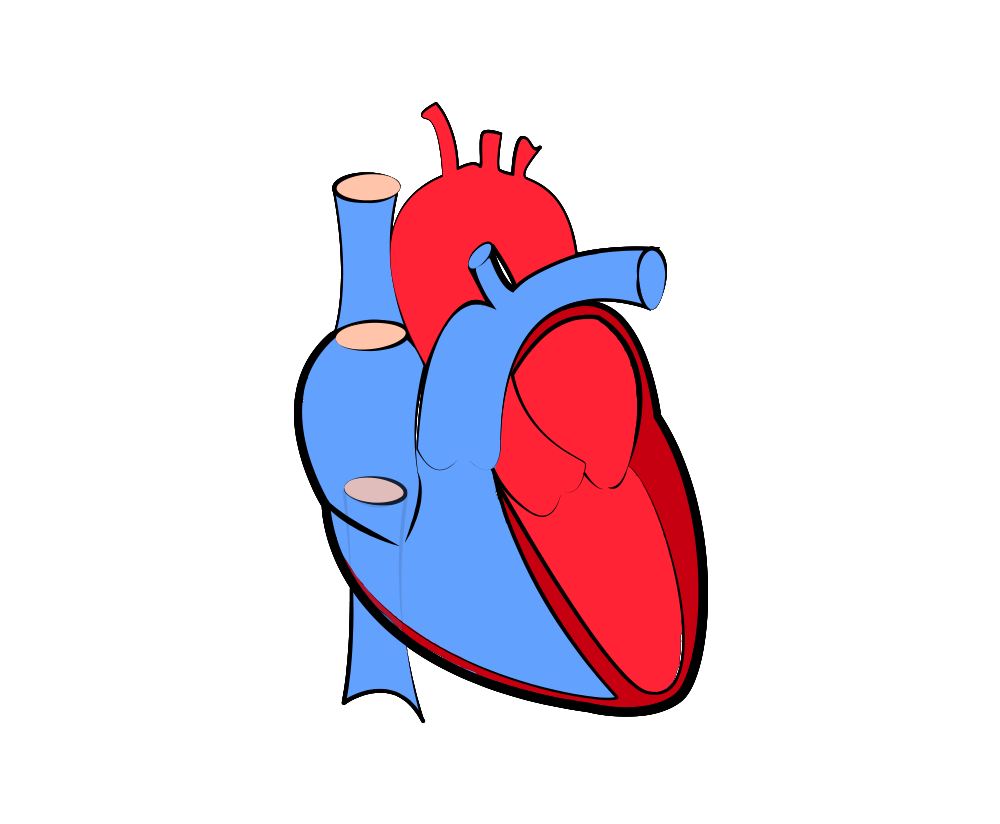 Real Heart Png & Free Real Heart.png Transparent Images ...