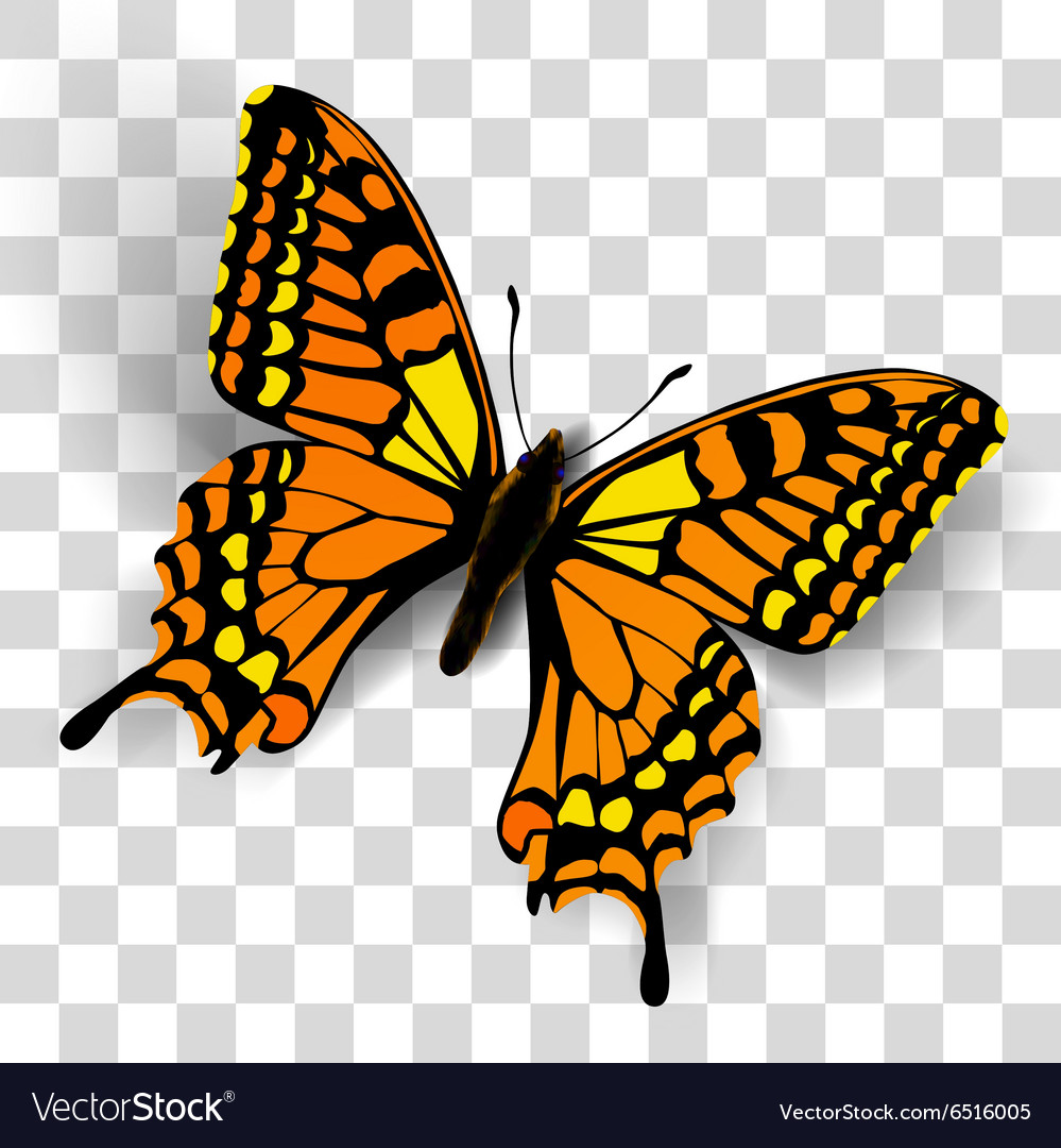 Butterfly Transparent Background - Realistic butterfly on transparent background Vector Image