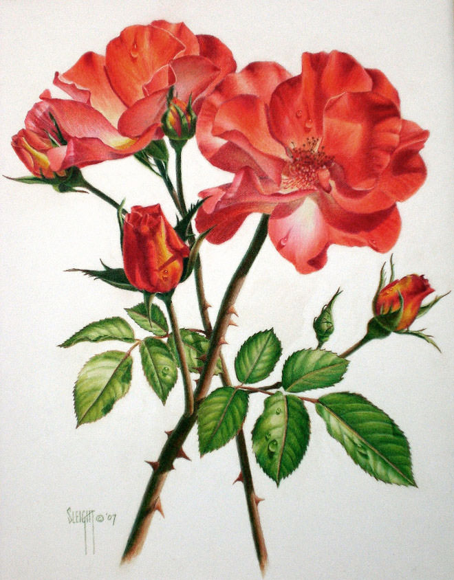 Red Flower Drawing - Red Flower Drawing at PaintingValley.com | Explore collection of ...