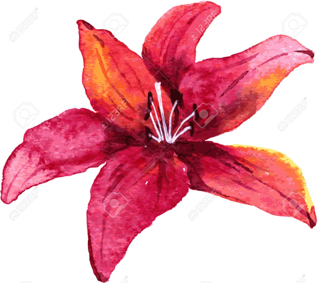 Red Flower Drawing - Red Lily Flower Drawing By Watercolor, Hand Drawn Vector ...