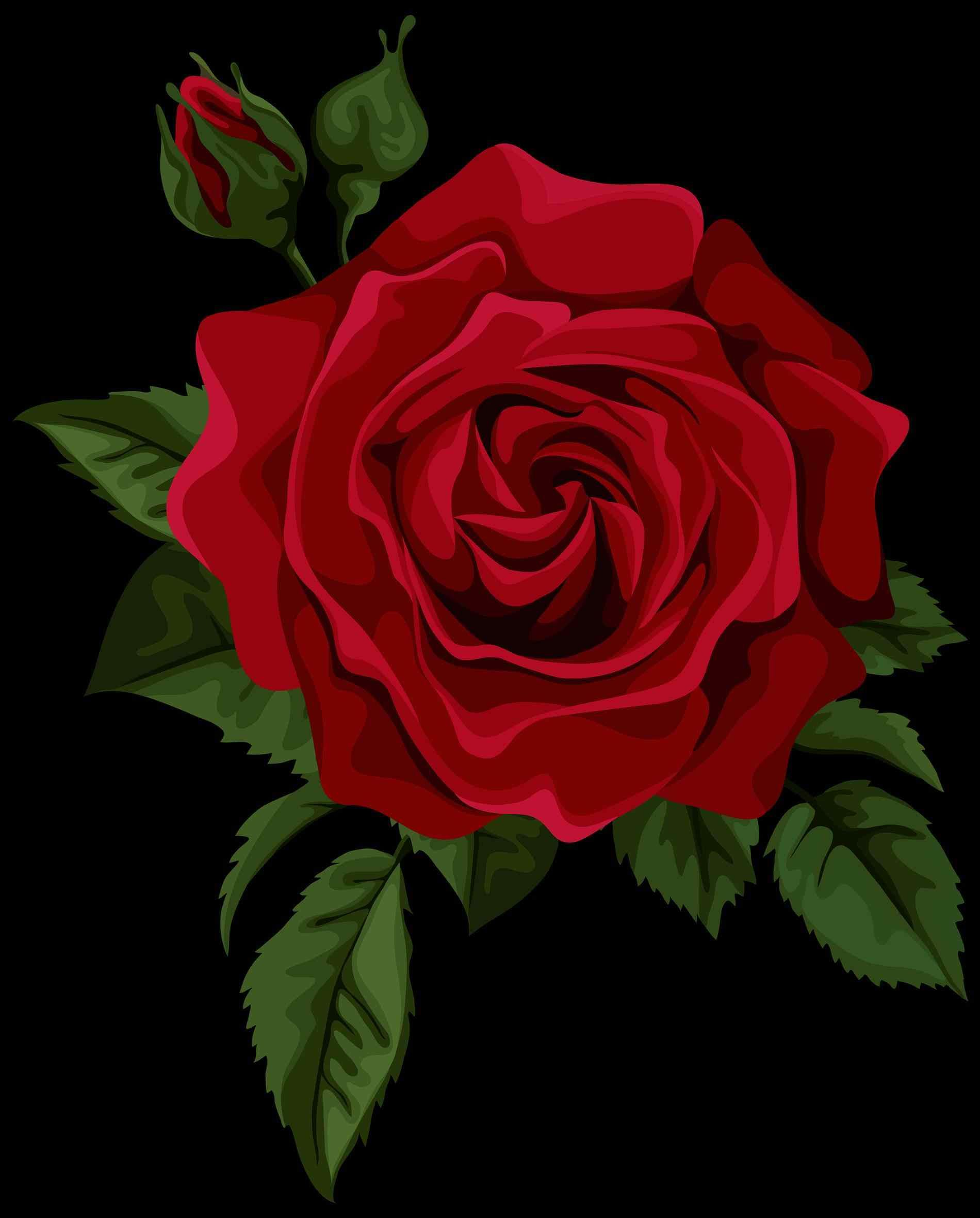 Red Rose Drawing Png R 65823 Png Images Pngio
