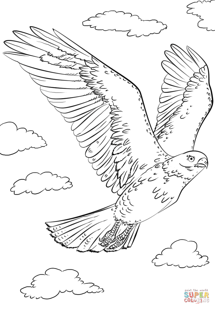 Hawk Coloring Pages Png Free Hawk Coloring Pages Png Transparent Images 88349 Pngio
