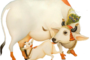Krishna With Cow Png - Related Wallpapers