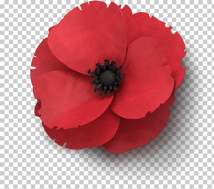 Armistice Day Png - Remembrance poppy Flower In Flanders Fields Armistice Day, poppies ...