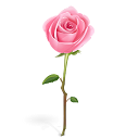 Tiny Rose Png - Rose icon