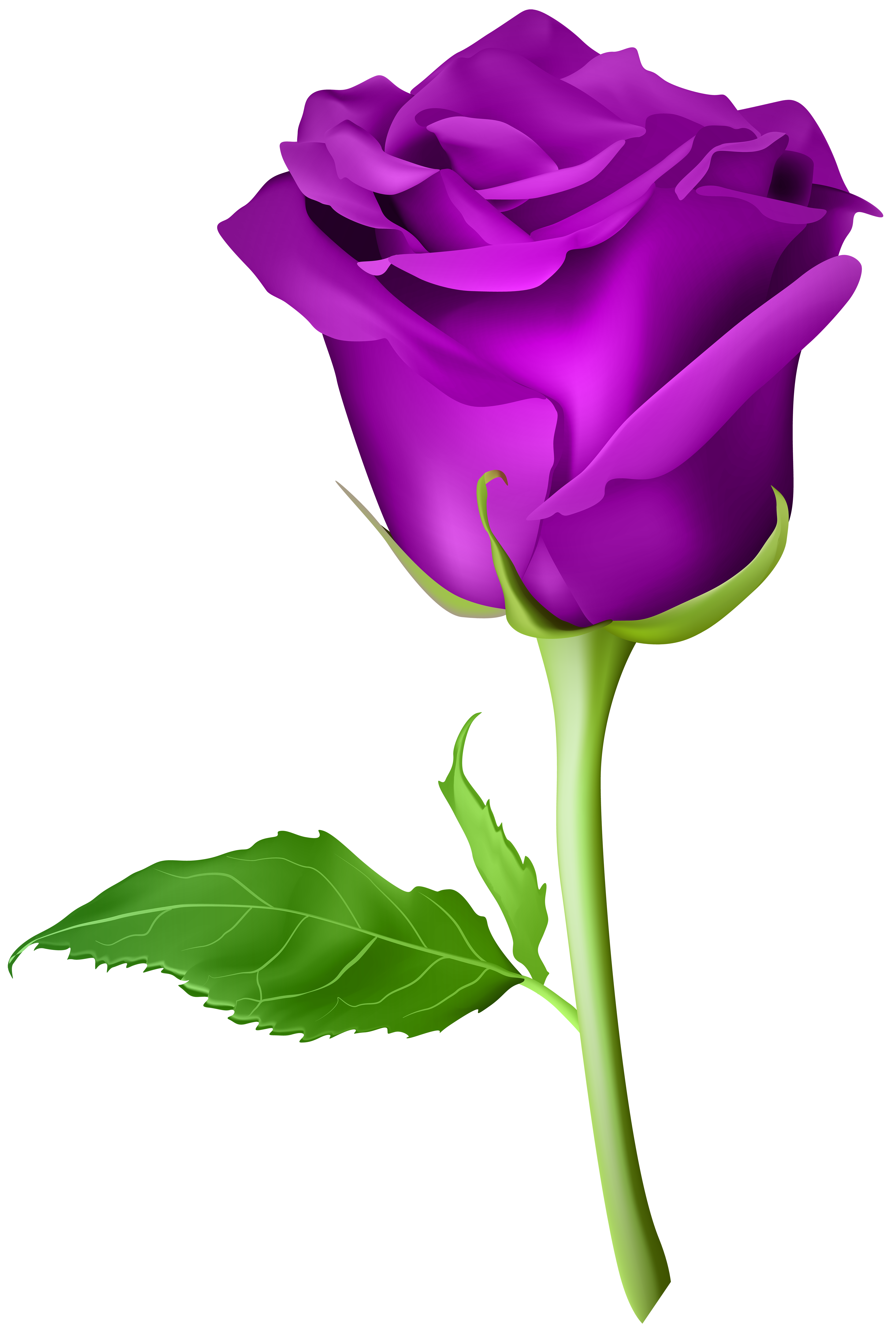 Violet Rose Png - Rose Purple Transparent PNG Clip Art Image​ | Gallery Yopriceville ...