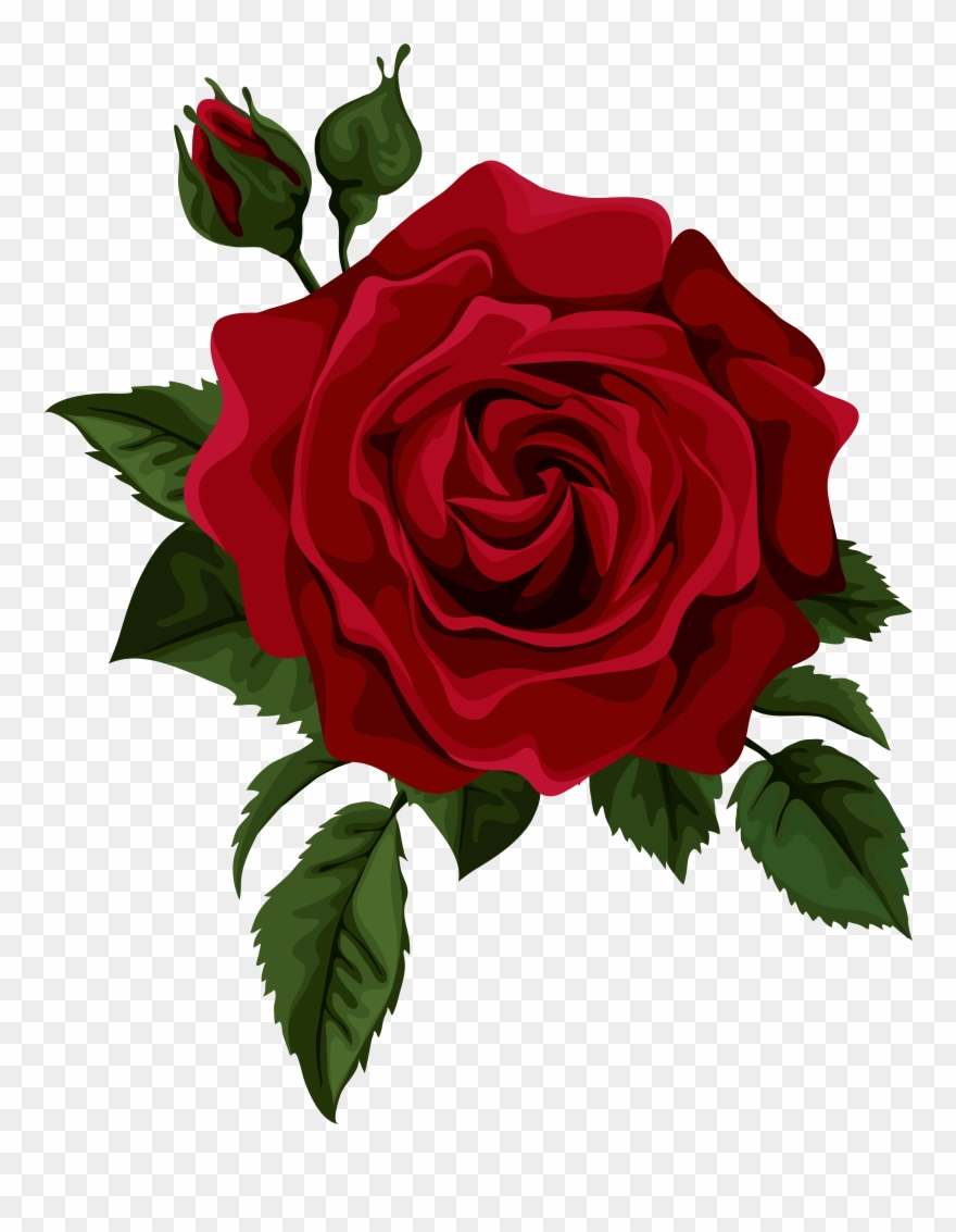 Rose Vector Png - Roses Red Rose With Bud Transparent Clip Art Picture - Red Rose ...