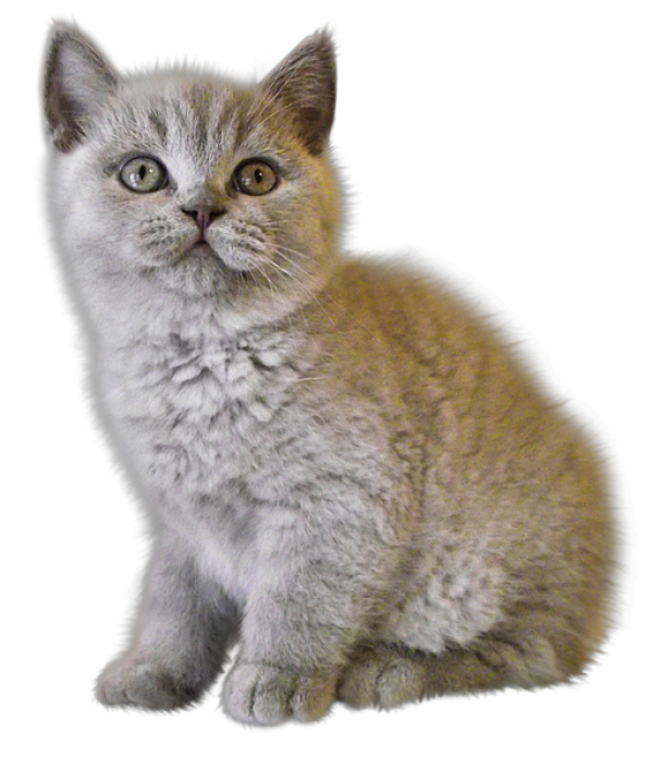 Sad Cat Png & Free Sad Cat.png Transparent Images #35906 ...