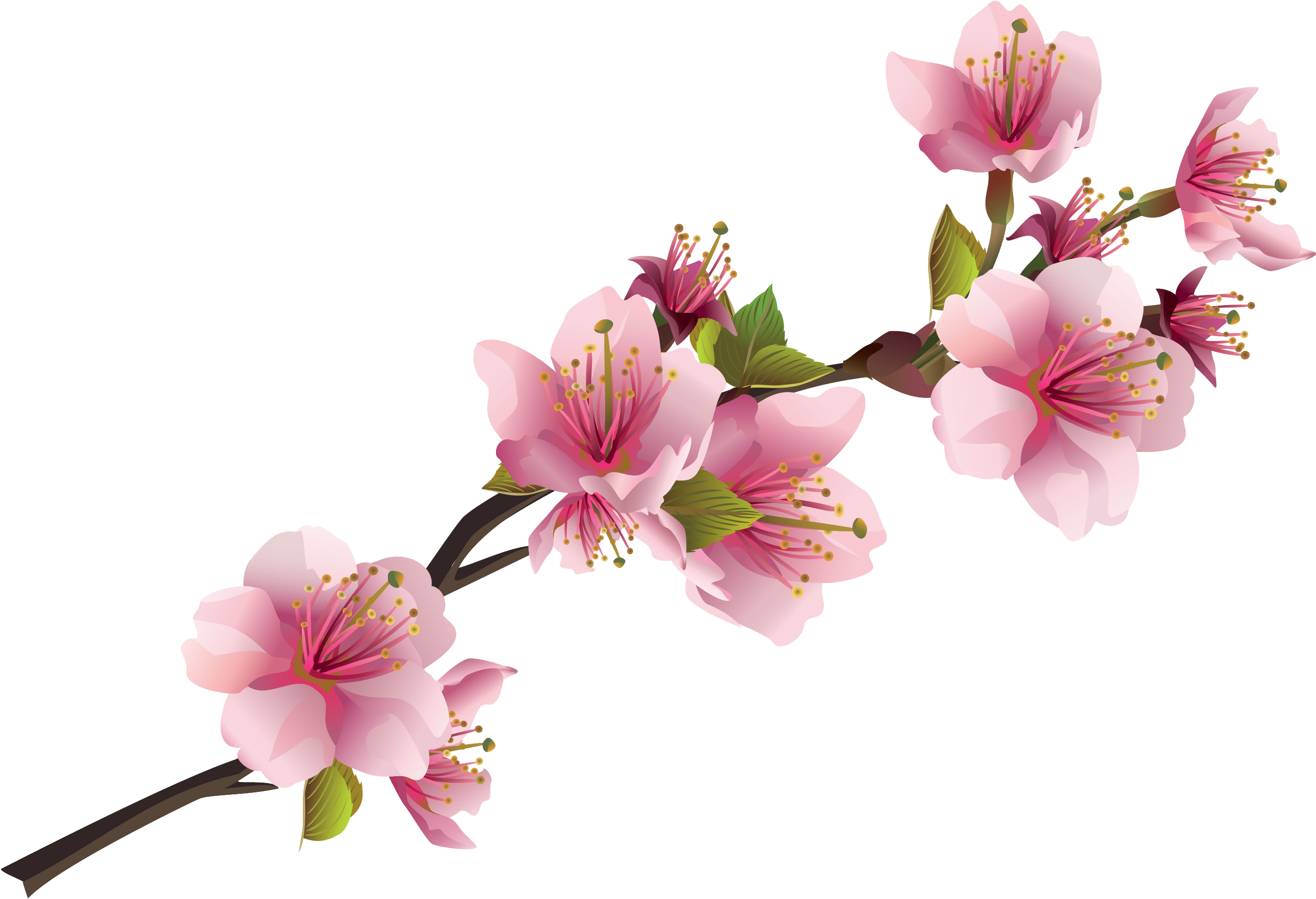 Pink Flowers Png & Free Pink Flowers.png Transparent ...