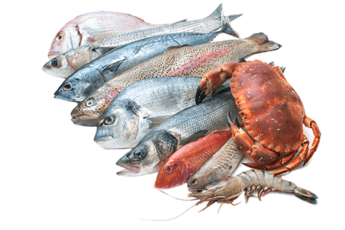 Fish And Seafood Png - Seafood Collection transparent PNG - StickPNG