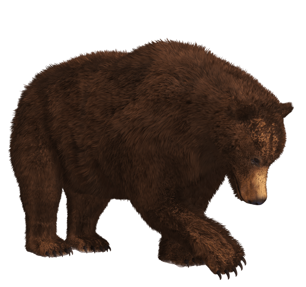 Bears Png Without Background - Searching Bear