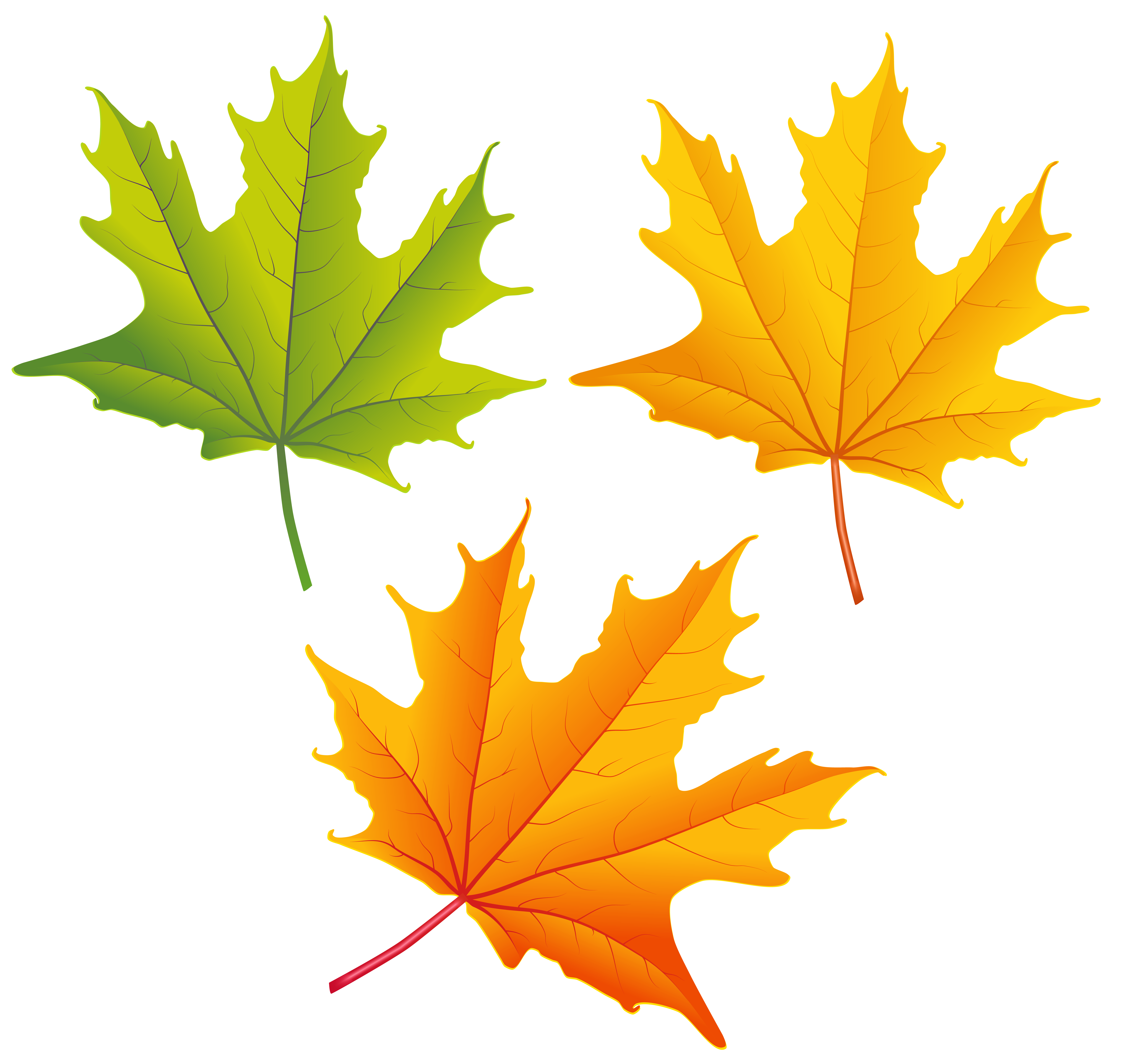 Fall Images Png - Set of Autumn Leaves PNG Clipart Image | Gallery Yopriceville ...