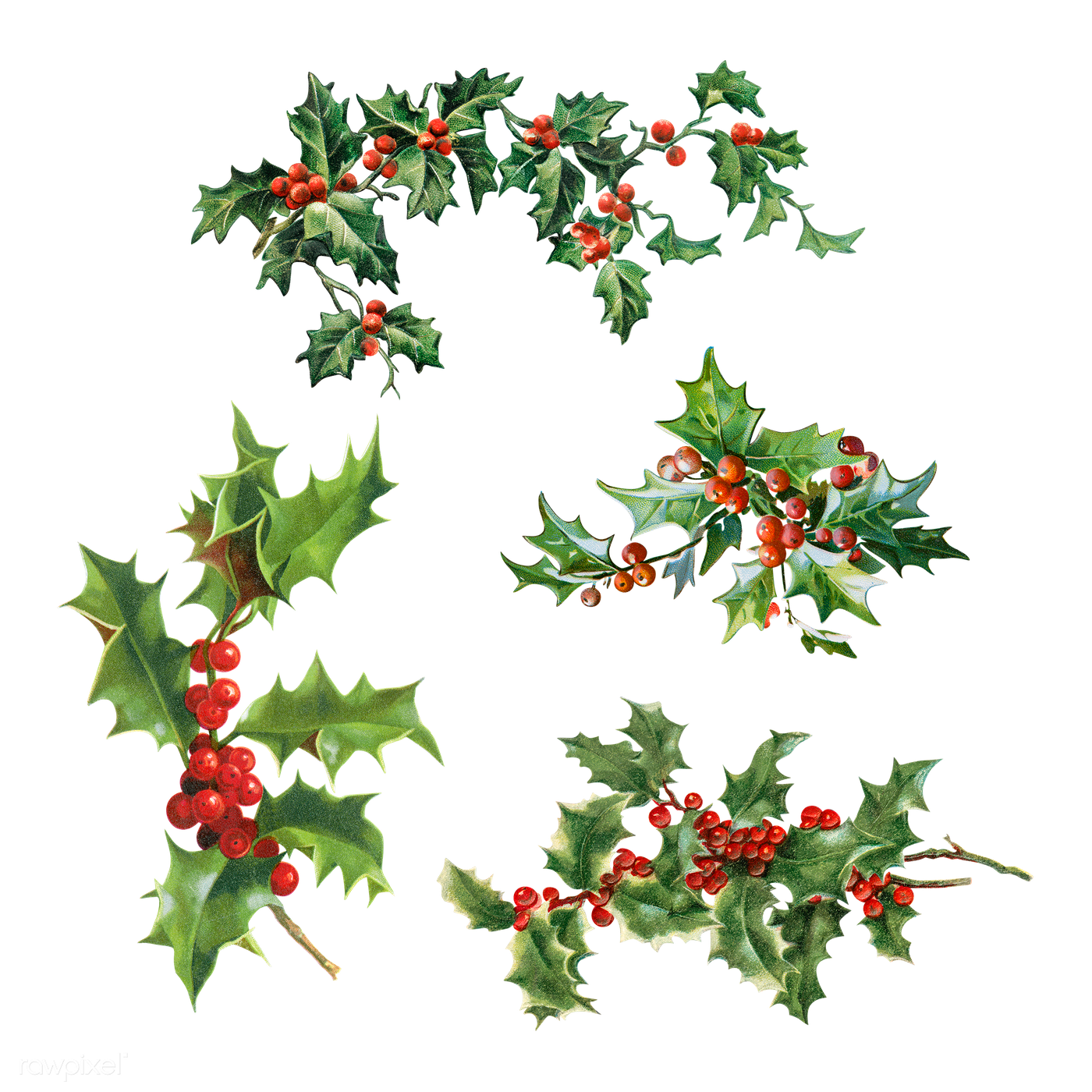 Vintage Christmas Holly Png - Set of Holly leaves with berries | Royalty free transparent png ...