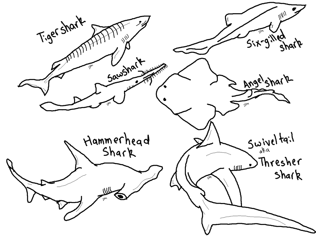 Shark Coloring Pages Png Free Shark Coloring Pages Png Transparent Images 94367 Pngio
