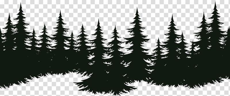 Forest Silhouette Transparent Background - Silhouette of trees, Spruce Fir Tree Pine Evergreen, tree ...
