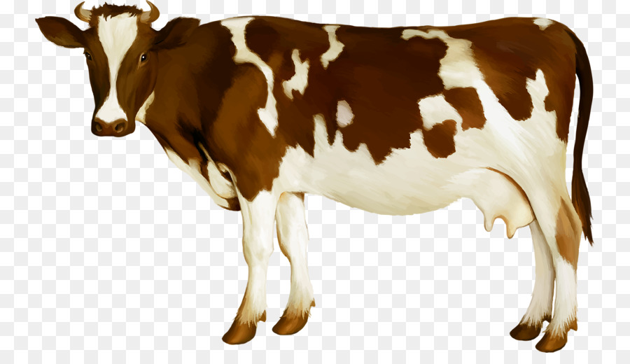 Cow Png - Simmental cattle Milk Dairy cattle Calf - Cow