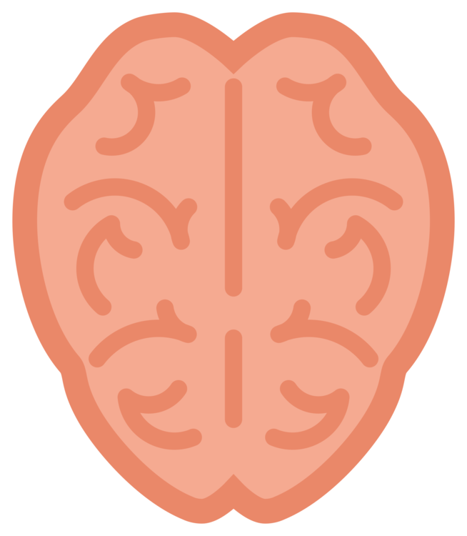 simple brain png free simple brain png transparent images 4611 pngio simple brain png transparent