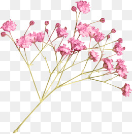 Png Tree With White And Pink Flowers - Small Flowers PNG Images | Vectors and PSD Files | Free Download ...