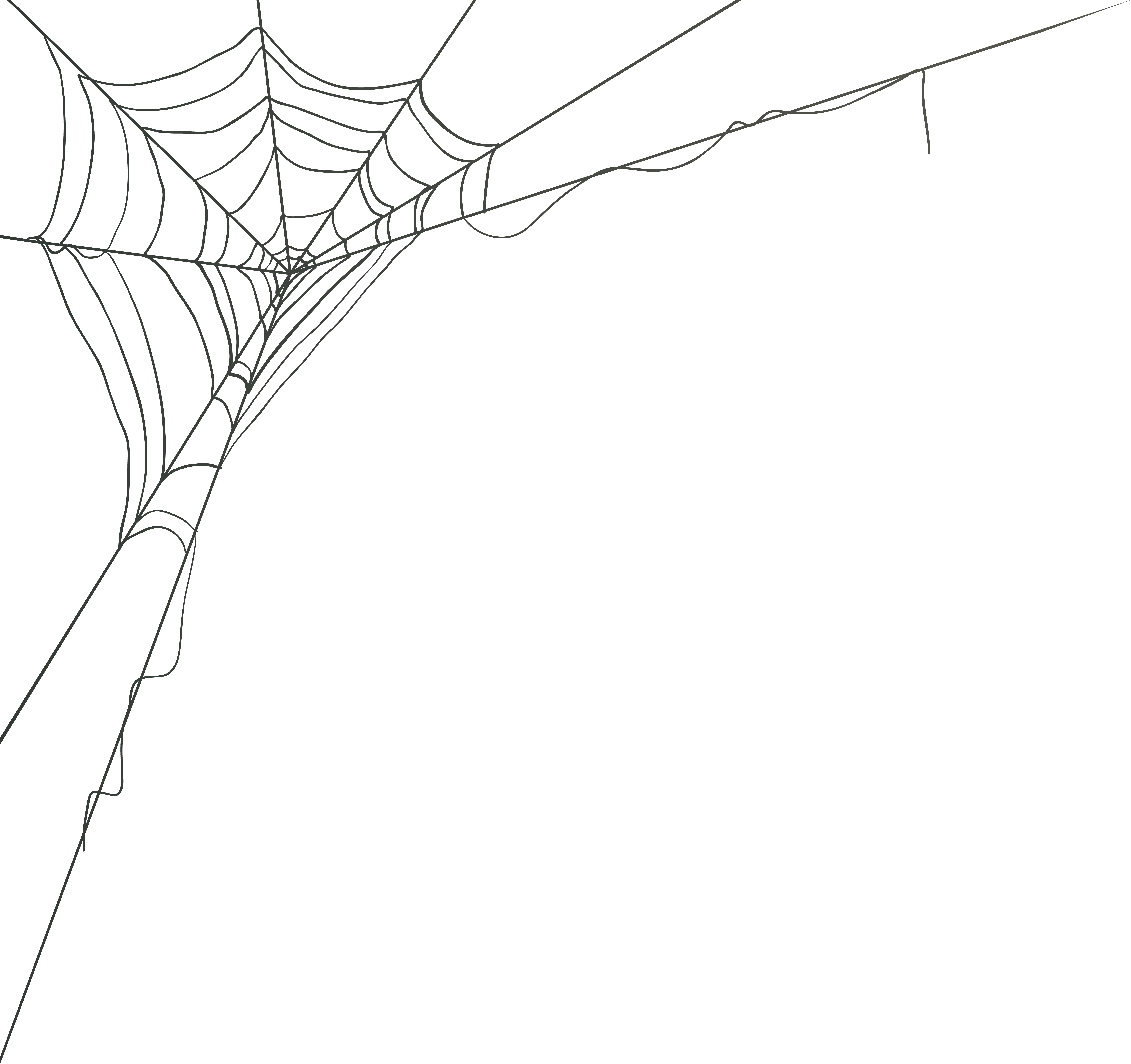 Spider Web Graphics Png Free Spider Web Graphics Png Transparent Images 100732 Pngio