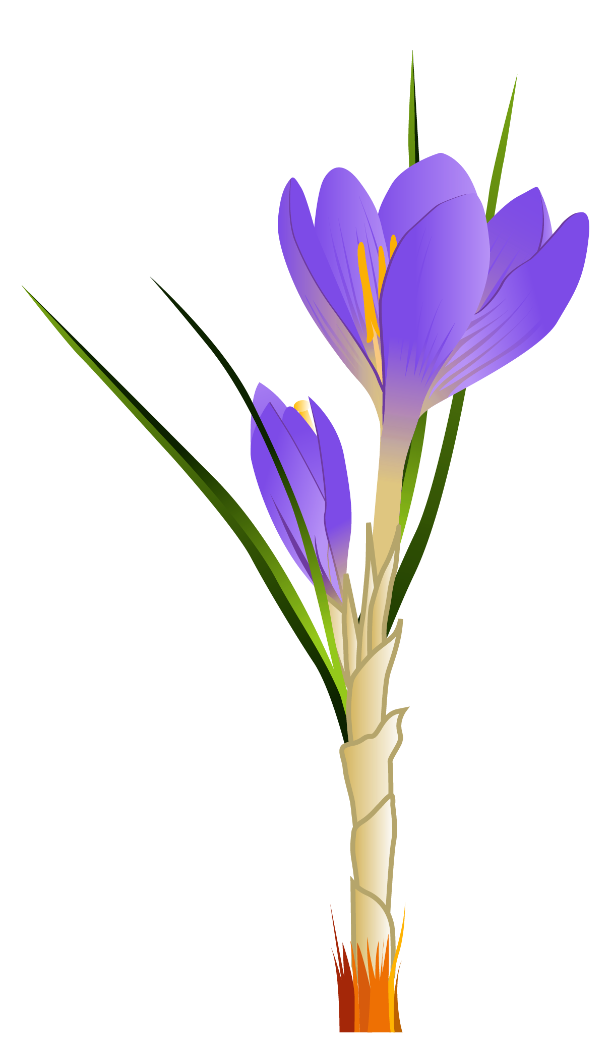 Spring Crocus Png - Spring Crocus PNG Clipart Picture | Gallery Yopriceville - High ...