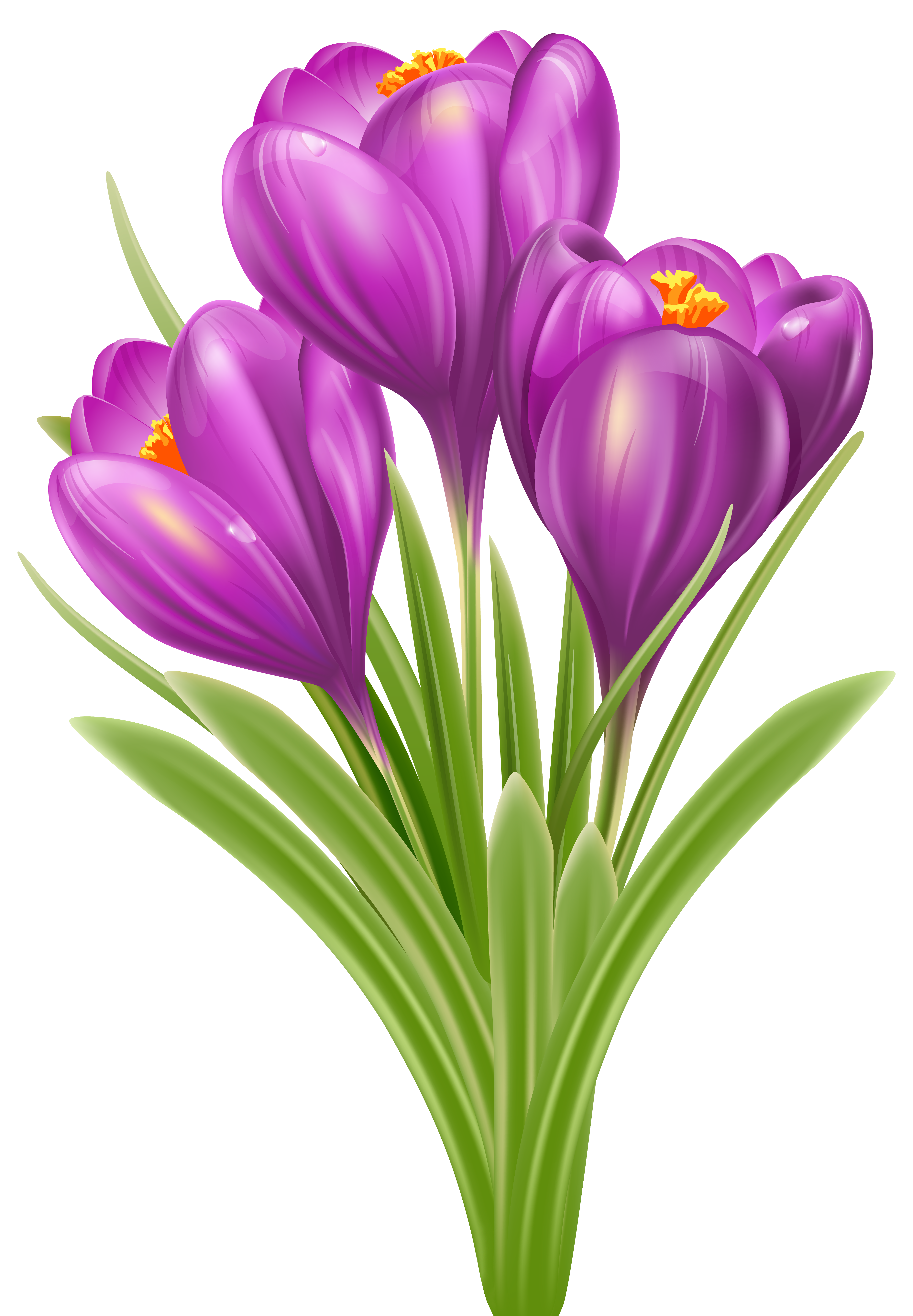 Spring Crocus Png - Spring Crocus PNG Image   Gallery Yopriceville - High-Quality ...