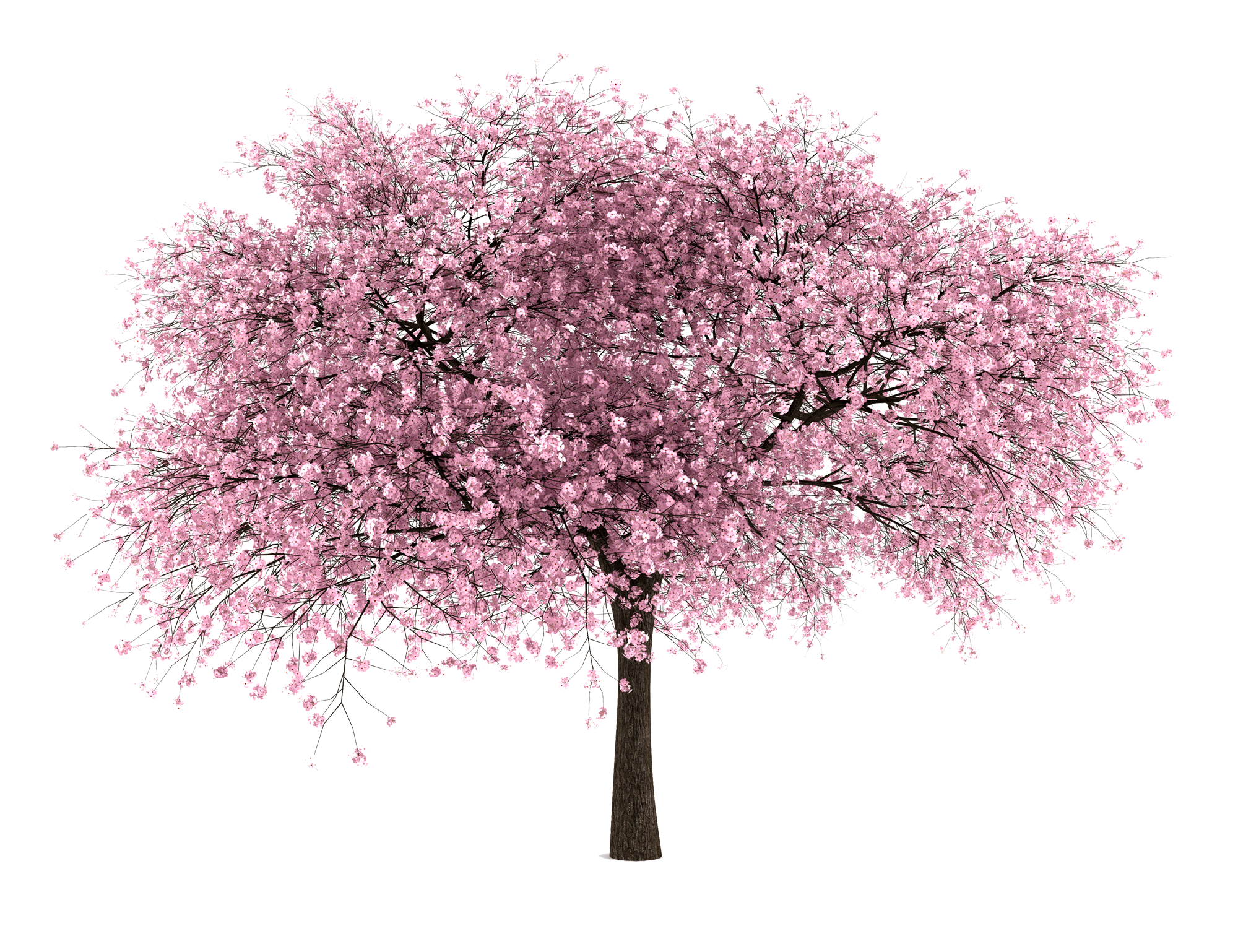 Png Tree With White And Pink Flowers - Spring tree image download transparent - RR collections